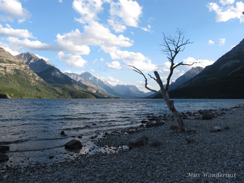 The shore of Upper Waterton Lake.