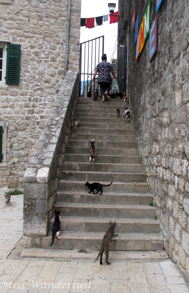Kotor-old-town-cats