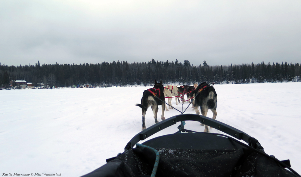 jasper-dogsledding