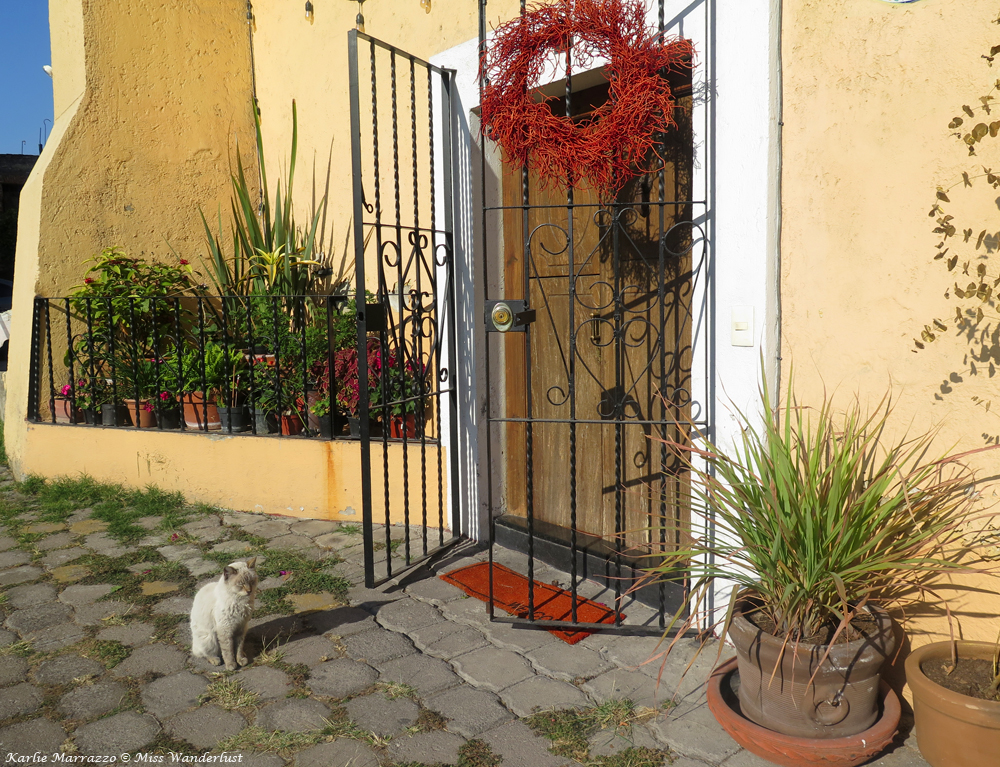 A neighbourhood cat in the courtyard of a home in Puebla, Mexico.