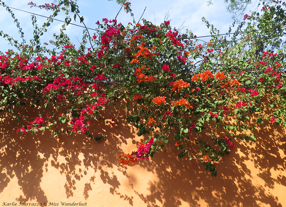 Red flowers blooming atop an orange wall with a blue sky in the background.