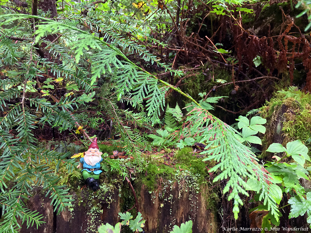 A small gnome figurine sits on a ledge in a forest, surrounded by lush green tree branches