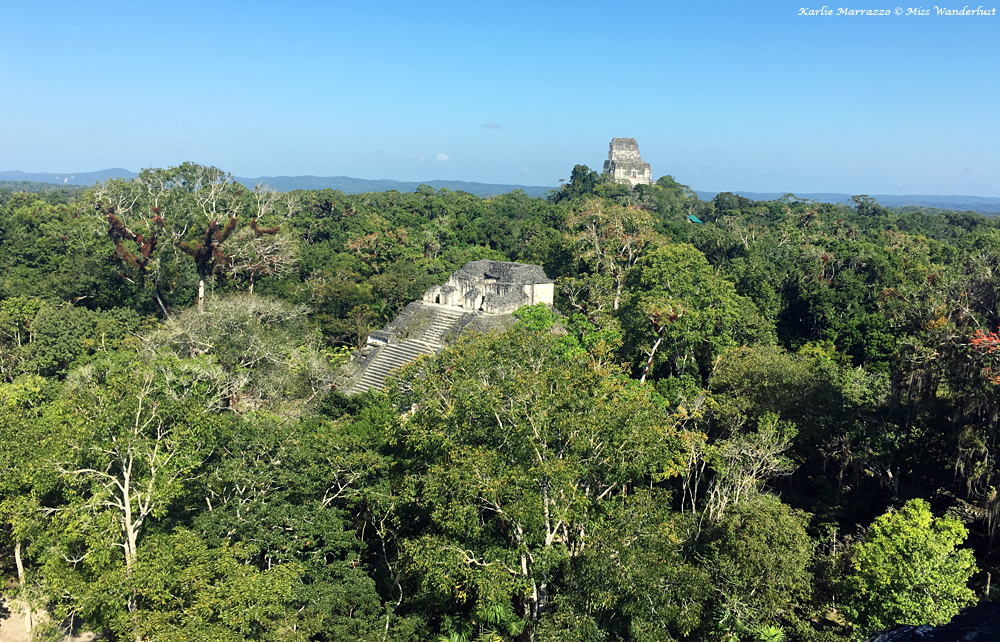 the tops of ancient mayan pyramids peek out from the rich guatemala jungle